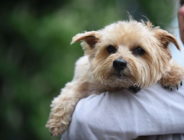 Dog Terrier Cute Pets Dog Love Scruffy Animals Animal Photography Animal_collection Dogs Dogslife Relax Relaxing