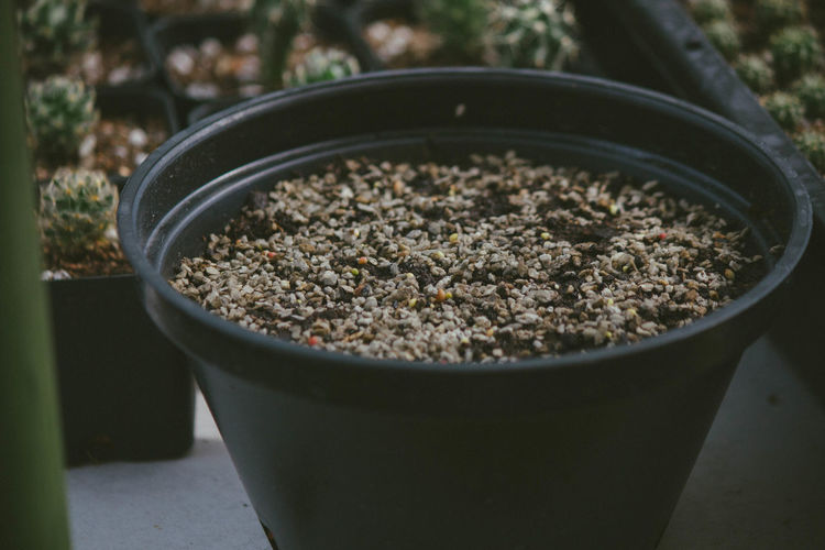 High angle view of potted plant in bowl