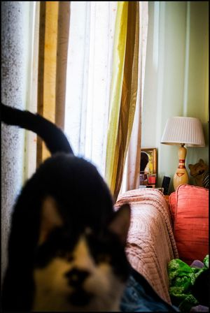 Animal Animal Lover Animal Photography Cat Documentary Cat Lovers Cat Photography Cat Portrait Cat Watching Cats Domestic Cat Family Pet House Cats Kittens Kitty Cat Kitty Cats  Mason Family Cats Pet Photography