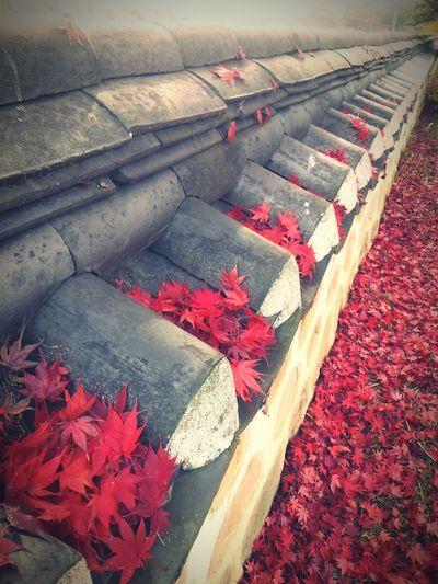 Autumn Leaf Red No People Day Cheongdo-gun 청도 Nature