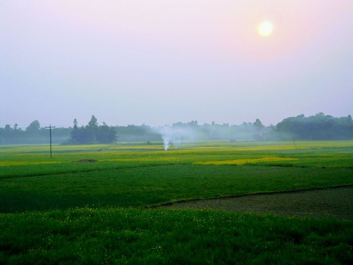 EyeEmNewHere EyeEm Nature Lover Evening Field Nature Beauty In Nature Landscape Tranquility Fog Scenics Rural Scene Tranquil Scene Sky Growth Outdoors Green Color Tree Freshness No People