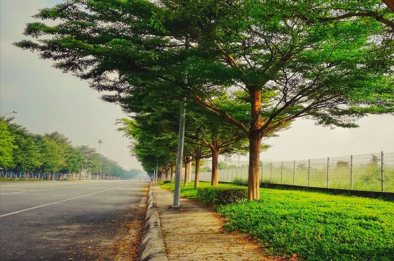On the way to work.. Tree Road No People Beauty In Nature Vietnam Beautiful Working Day Nice Day Vietnamese Photooftheday Morning Photography Vietnam Street View Newcity