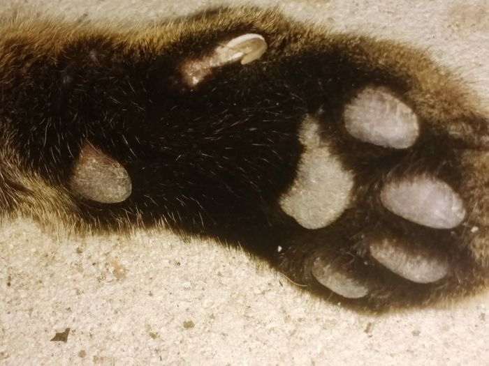 Feline Animal