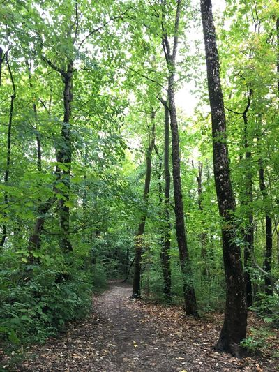 Weg durch den Wald in den Isarauen in München, Herbstanfang, Trees And Nature Way Through Wilderness Way Through Forest Forest Tree Plant Growth Green Color Land Forest Beauty In Nature Tranquility Nature Tranquil Scene WoodLand