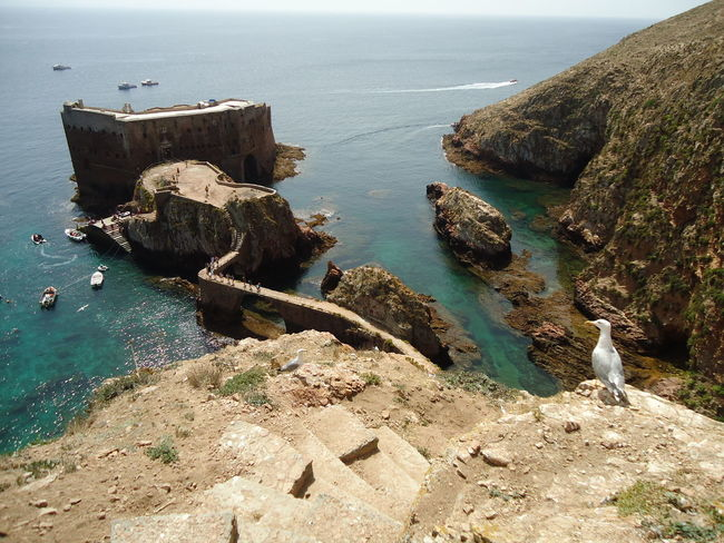 Beauty In Nature Berlengas Bird Cliff High Angle View Horizon Over Water Island Nature Oldhotel Outdoors Peniche Portugal Rock Formation Scenics Sea Tranquil Scene Tranquility Water