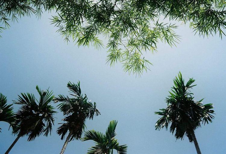 Nature 🌲 Tree