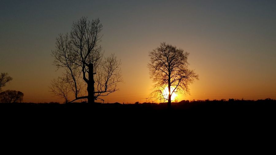 Tree Sunset Rural Scene Horizon Silhouette Agriculture Tree Area Horizon Over Land Sunlight Field
