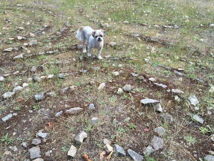Adius 3 years ago on the Celtic circle on Gabriola Island. High Angle View Dog Grass