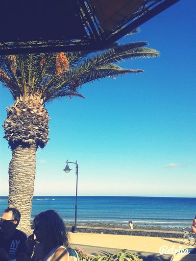 ♡Canarie♡