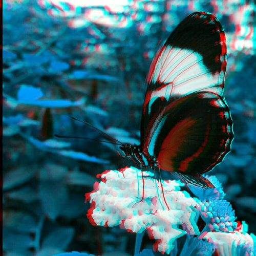 Butterfly Butterfly Collection Insects  Insect_perfection Nature Photography Insect Photography 3dpicture 3Dart Art Eye4photography