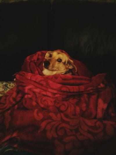 I Love My Dog Dog❤ Meggy Dream Eye4photography