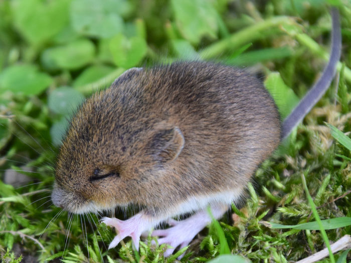 Lost baby mouse, still blind... Animals In The Wild Baby Mouse Blind Mouse Close-up Mammal Mouse Nature No People