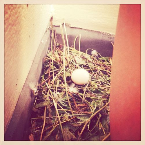 Hanging out in Walthamstow - nest on balcony