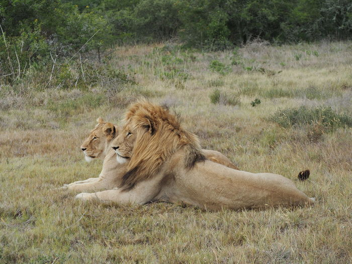 Full length of a cat lying on field