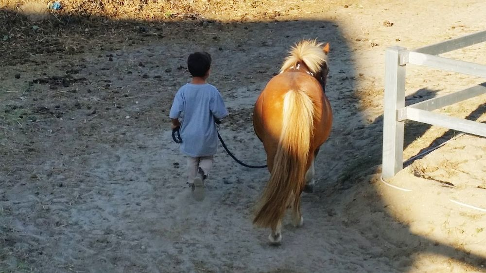 Child and his pony Love Passion