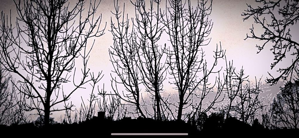 Silent Hill Silhouette Low Angle View Sky No People Built Structure Tree Architecture Outdoors Backgrounds Day Nature