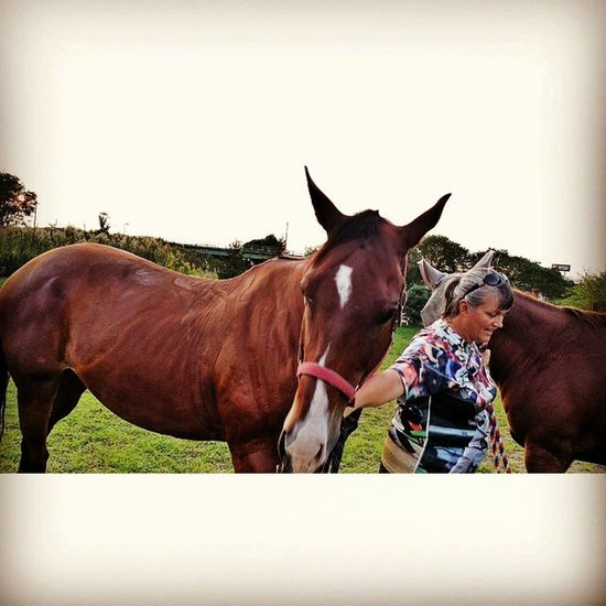Riding horses today! Horses Riding Horselover Animal Horse Friends Horse Stables! Farm Farm Life Rural America