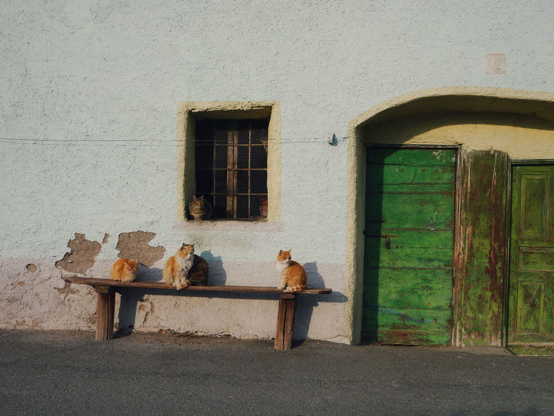 Cats chit-chat on a Bench Italy Green Port Window Temu Ponte Di Legno Pastel Power Fine Art Photography TCPM