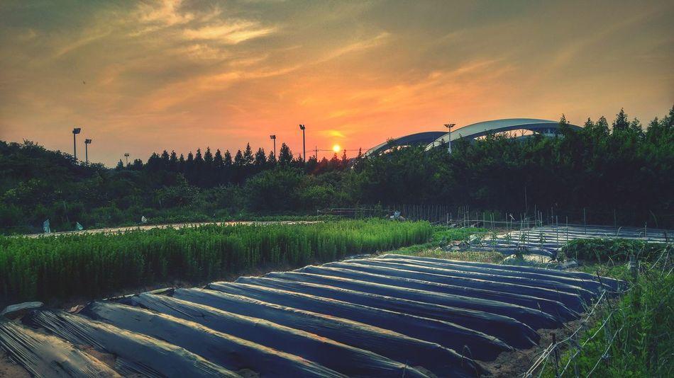 Sunset in Gwangju near Gwangju Worldcup Stadium The Essence Of Summer
