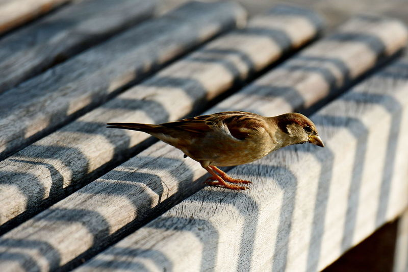 Close-up of bird perching on roof
