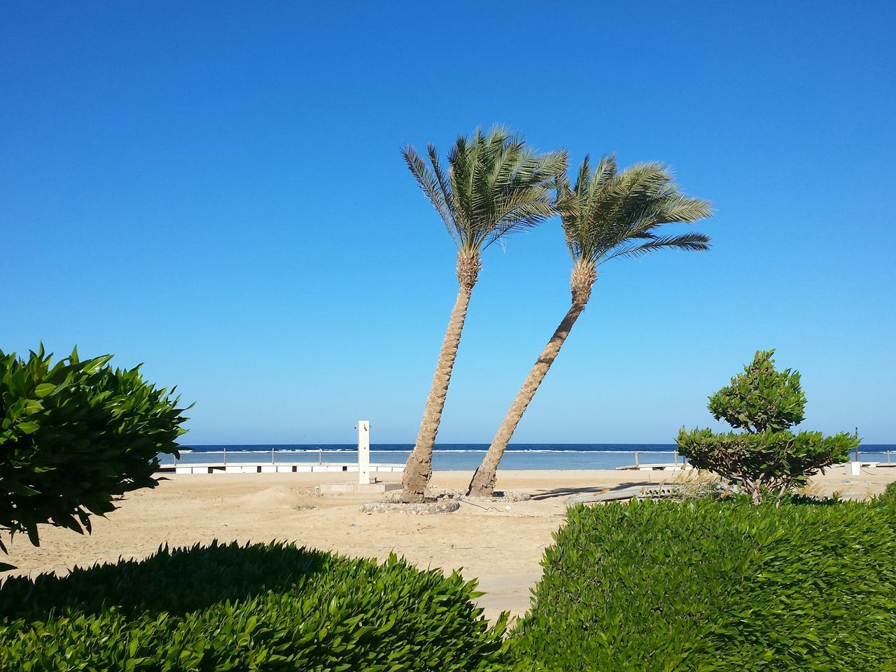 tree, beauty in nature, nature, sand, beach, blue, day, clear sky, tranquil scene, scenics, water, growth, tranquility, sea, no people, outdoors, grass, sky