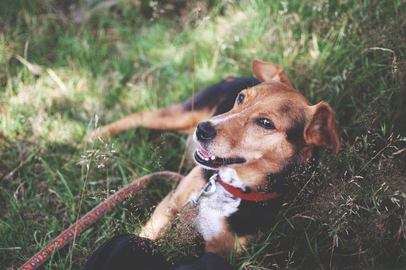 Close-up of dog sitting on field