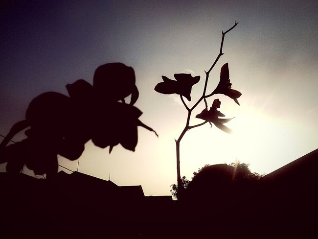 Sunrise_sunsets_aroundworld Sunset Taking Photos Morning Sky Enjoying Life Hello World The Purist (no Edit, No Filter) Simple Photography Shades Of Grey Capture The Moment EyeEm Nature Lover Tadaa Community Light And Shadow Flowers,Plants & Garden EyeEm Gallery Cameraphonephotography Flower Flowers For Passion! Skyporn Pureshot Taking Photos Eye4photography  Hello World That's Me Capturemoment