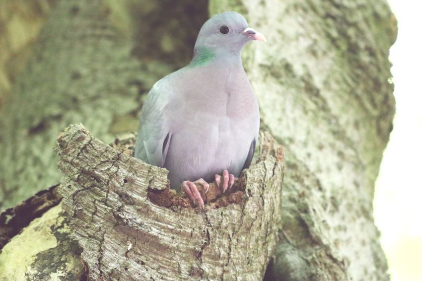 Vertebrate Animal Animal Themes Bird Animal Wildlife Animals In The Wild One Animal Nature Dove - Bird Plant Tree Day Pigeon Beauty In Nature Outdoors