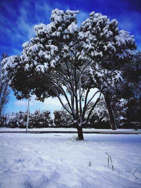 Alberto.. :) Snow Winter Cold Temperature Nature Weather Frozen Tree