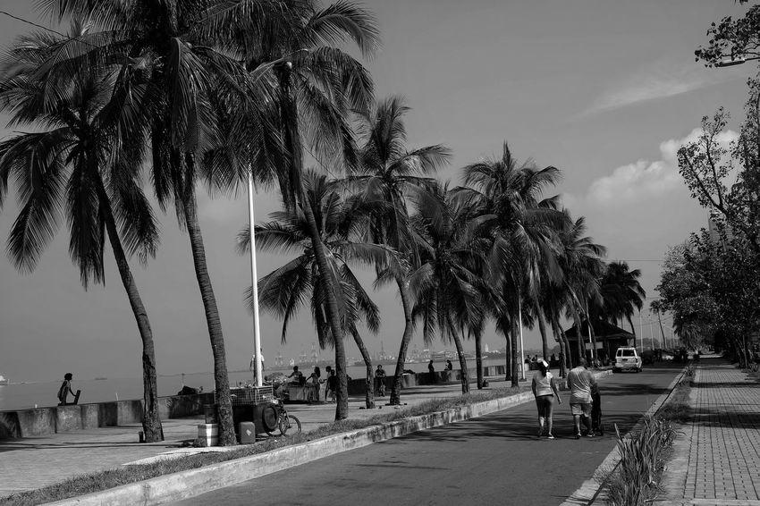 Bay Blackandwhite LINE Manila Manila Bay  People Perspective Pub Public Places Roxas Boulevard Trees