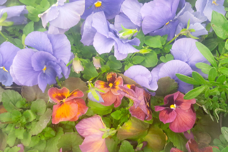 Pastel Power Flowers Pink Purple Flower Purple Green Nature_collection Nature Photography