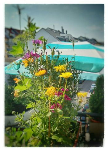 Hello summer! Enjoying The Sun Soaking Up The Sun München Enjoying Life Cityscapes Urban Nature Balcony Flowers Naturelovers Bright Lights
