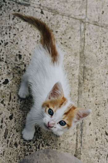 High angle view of cat