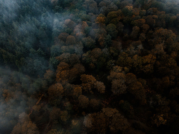 Autumn Forest drone view No People Nature Backgrounds Tranquility Full Frame Plant Tree High Angle View Beauty In Nature Growth Scenics - Nature Outdoors Day Close-up Land Smoke - Physical Structure Sea Water Tranquil Scene