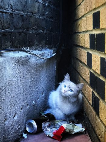Can you take me home? - Domestic Cat Pets Feline Domestic Animals Animal Themes One Animal Mammal Whisker Portrait Looking At Camera Day Sitting No People Outdoors Mingau The Portraitist - 2017 EyeEm Awards Kitty White Cat EyeEm Selects EyeEm LOST IN London