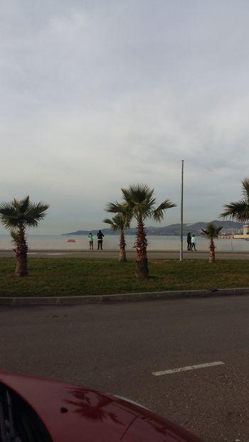 пальмы в Сочи Sochi Море Сочи пальмы просторы отпуск Beach Cloud - Sky Sky Tree Day Outdoors People