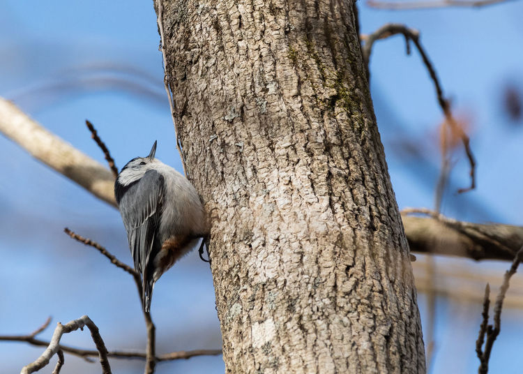Low angle view of bird perching on tree trunk