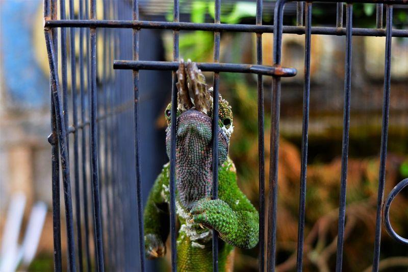 Close-up of snake hanging