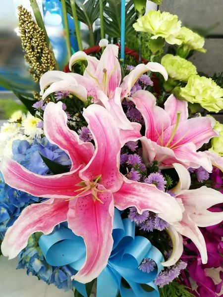 Beauty In Nature Blooming Close-up Day Flower Flower Head Fragility Freshness Growth Nature No People Outdoors Petal Pink Color Plant