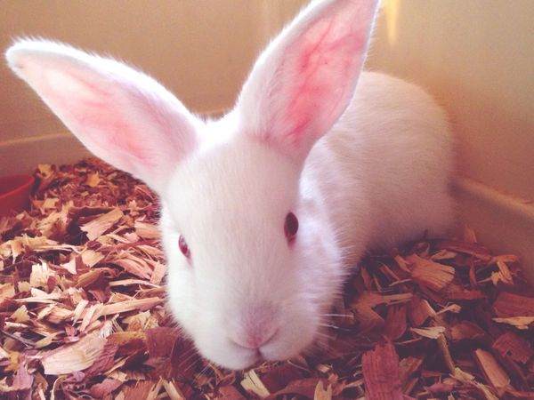 Playing With The Animals Furbaby Love Beautiful Bunny  Taking Photos EyeEm Nature Lover Cute Pets January 2015