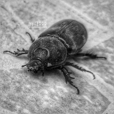 Blackandwhite Bw Cute HDR Nature Macro ماكرو تصويري  صورة كاميرات سوني اكسبيريا Cam Sony XPERIA Sonyxperia Insects  Insect Bug Macro كيوت Animals Animals Instanature Instagood beautiful ican earth locallens xperiachallenge