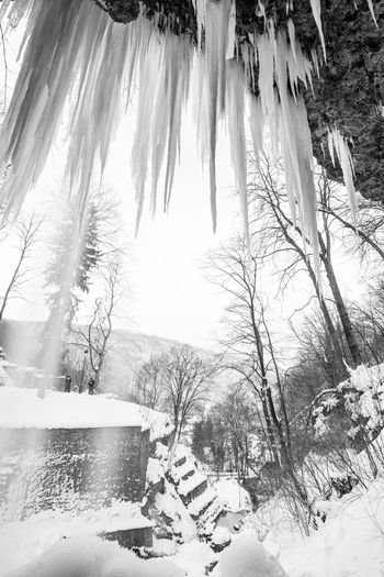 Jailed Frozen Waterfall Mik Magyarország Hungary Miskolc Lillafüred Black & White Blackandwhite Nature Beauty In Nature Cold Temperature Outdoors Day Tree No People Snow Winter Water Close-up
