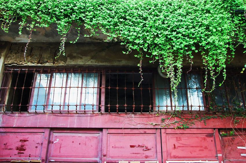Colors And Patterns Canon Canonphotography VSCO Old New Green Color Leaves Window Door