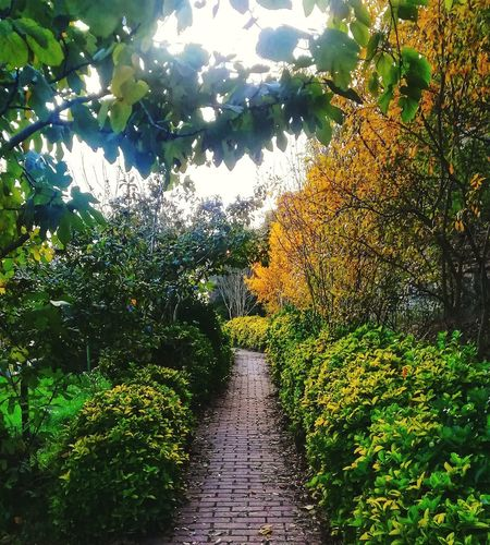Autumn Fall EyeEm Best Shots EyeEm Nature Lover Forest Yellow Day Nature Garden Tree Sky Green Color Plant Domestic Garden Countryside Farmland Growing Pathway Greenery Young Plant Green Walkway Calm Grassland Agricultural Field Country House