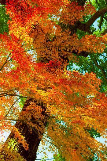 Colors Of Autumn Autumn Colors Autumn Temple