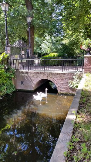 Fine Art Photography Taking Photos Swans Swans ❤ Swantastic Dutch Canal Haagsebeek Mauritskade Denhaagcanal Denhaag To Go Visit Denhaag Enjoying Life Swanlovers Nofilter