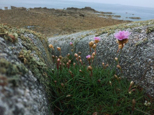 Flowers Nature Rock Rocks Sea Ocean Coast French Coast