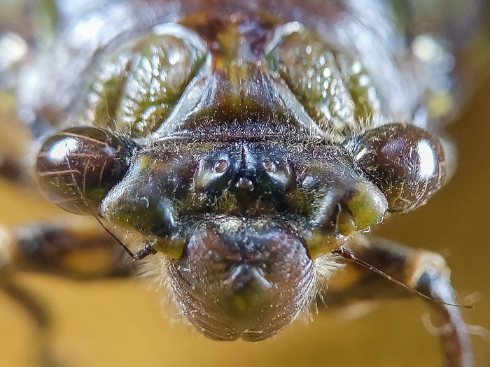 Stereo Insect