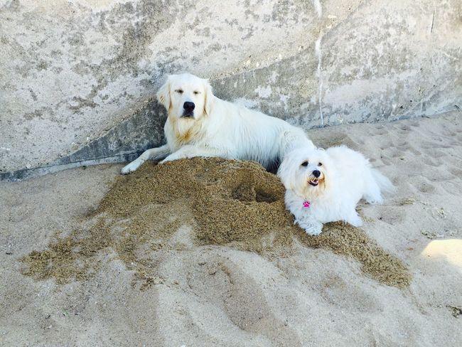 Isis😍 Ilovemydog Myprincess🐶🐶 Bestfriends