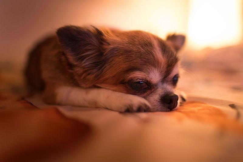 Cute Sleeping